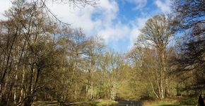 Glenrothes: Riverside and Woods