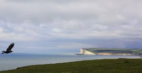 Bounding up to Belle Tout, East Dean