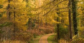 Pont Annell Walk Caio Forest