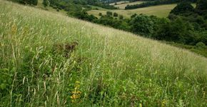 Happy Valley and Farthing Downs Nature Trail