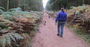 Cannock Chase Club Site Miflins Valley walk