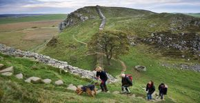 Hadrian's Wall & Housesteads to Sycamore Gap